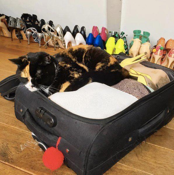 Wat doe je met je huisdier als je op reis gaat?