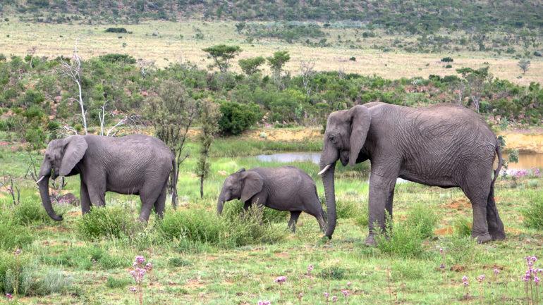 Op Safari in Zuid-Afrika, Limpopo